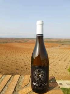 Bílé víno Hacienda Molleda Blanco Garnacha